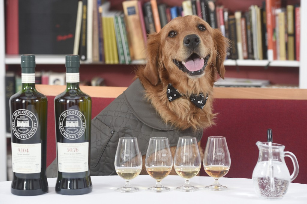 AA The world's first whisky sniffer dog, The Scotch Malt Whisky Sociey - photo by Greg Macvean 4 web